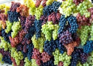 todas as uvas